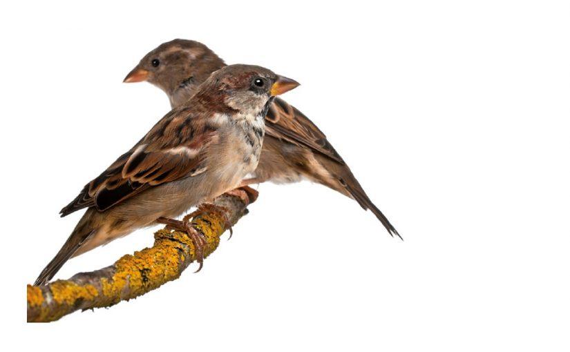 Vögelchen füttern nicht vergessen! | Don't forget to feed the birds! | ¡No se olviden de dar de comer a los pajaritos!